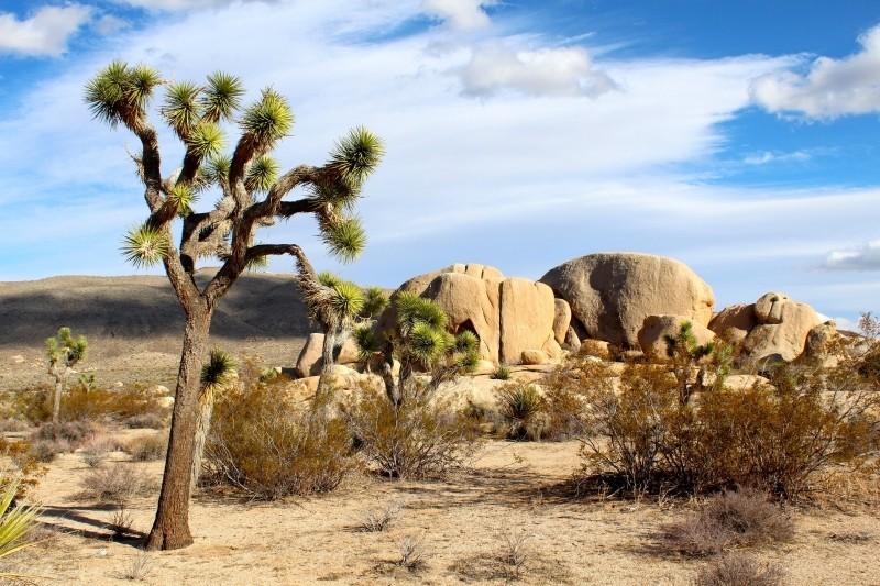 Công viên quốc gia Joshua Tree