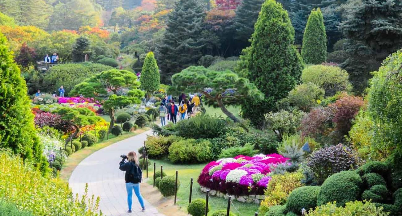 Vườn Morning Calm