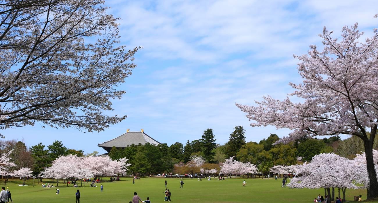 Vẻ đẹp của công viên Nara vào mùa thu