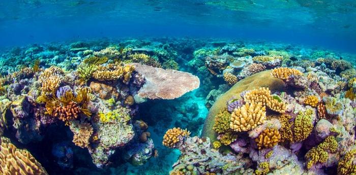 Rặng san hô Great Barrier Reef