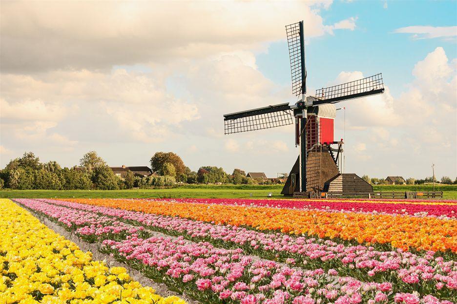 Bí quyết xin cấp visa đi Hà Lan thành công 100%