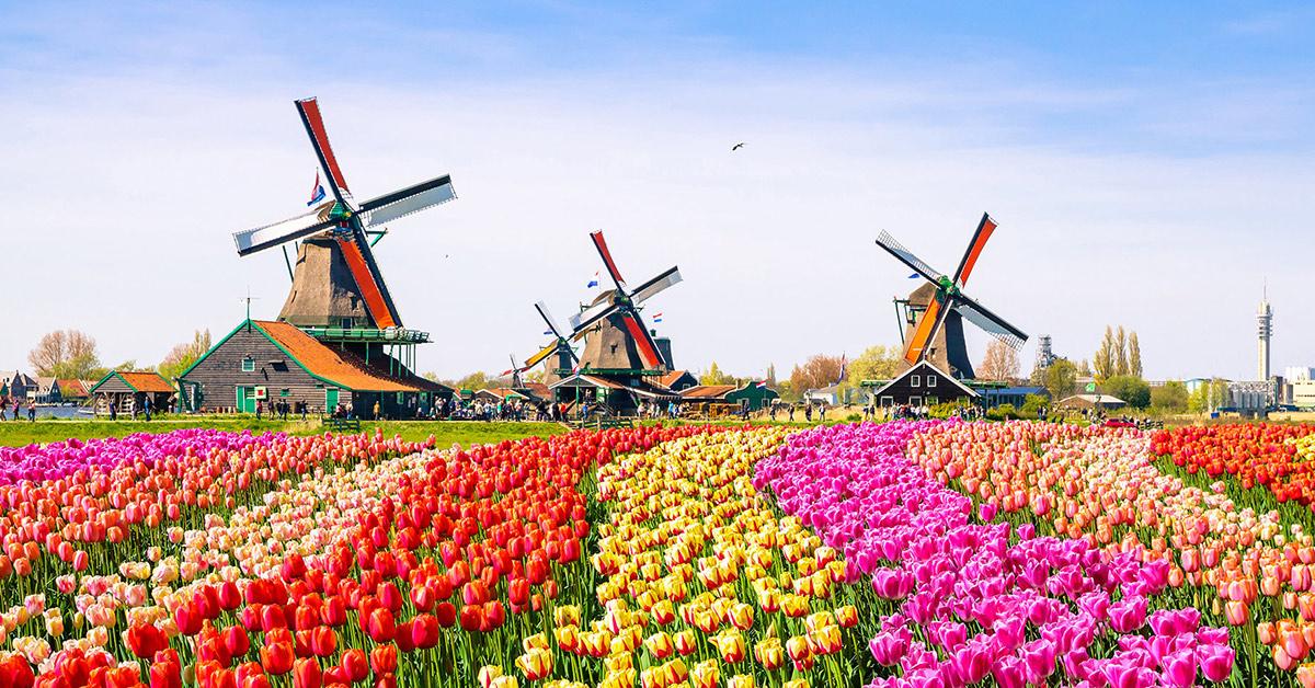 Kinh nghiệm du lịch Hà Lan chi tiết nhất